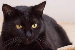 Ζωή των γατών και των ανθρώπων ως φίλους στοκ εικόνα με δικαίωμα ελεύθερης χρήσης