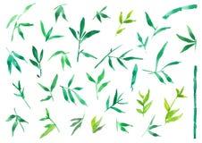Ζωγραφική απεικόνισης Watercolor των πράσινων φύλλων μπαμπού, απομονωμένο στοιχείο φυτών ελεύθερη απεικόνιση δικαιώματος