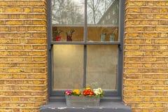 Ζωηρόχρωμη επίδειξη των λουλουδιών κήπων που τακτοποιούνται σε ένα κιβώτιο παραθύρων στοκ φωτογραφία με δικαίωμα ελεύθερης χρήσης