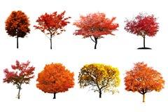 Ζωηρόχρωμο σύνολο δέντρων που απομονώνεται στο άσπρο υπόβαθρο στοκ φωτογραφία