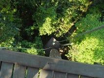 Ζωολογικός κήπος Khao Kheo Ζούγκλα στοκ φωτογραφία με δικαίωμα ελεύθερης χρήσης