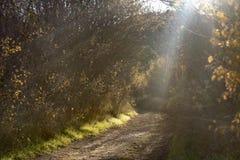 Ηλιαχτίδες μεταξύ της βλάστησης στην αυγή στο δρόμο στοκ εικόνες
