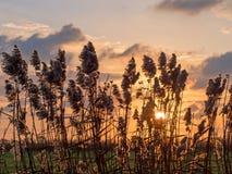 Ηλιοβασίλεμα μέσω των καλάμων σε επίπεδα Pevensey στοκ εικόνα