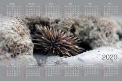 Ημερολόγιο για το 2020 στοκ φωτογραφία με δικαίωμα ελεύθερης χρήσης