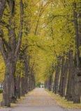 Η αλέα στο πάρκο είναι ευθυγραμμισμένη με τα δέντρα στοκ εικόνες
