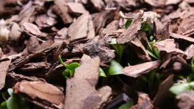 Η ανάπτυξη φυτεύει timelapse τη φυτική βλάστηση νεαρών βλαστών απόθεμα βίντεο