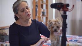 Η ανώτερη γυναίκα blogger καταγράφει το βίντεο blog για το σκυλί τεριέ yorkshite απόθεμα βίντεο
