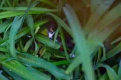 Η γάτα έκρυψε στην πράσινη χλόη στο λιβάδι στοκ εικόνες