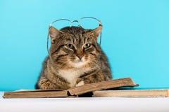 Η γάτα βρίσκεται στο διαβασμένο βιβλίο βιβλίο η γάτα στη βιβλιοθήκη στοκ εικόνα με δικαίωμα ελεύθερης χρήσης