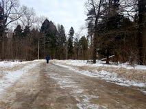 Η γυναίκα πηγαίνει κατά μια πράσινη χιονώδη χειμερινή δασική άποψη από την πλάτη στοκ εικόνες