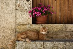 Η ηρεμία μιας γάτας μπροστά από την πόρτα του σπιτιού στοκ εικόνες