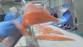 Η θηλυκή λωρίδα ψαριών περικοπών εργαζομένων, κλείνει επάνω φιλμ μικρού μήκους