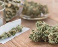 Η μαριχουάνα βλαστάνει επάνω κοντά με την ένωση στοκ φωτογραφία με δικαίωμα ελεύθερης χρήσης
