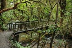 Η ξύλινη γέφυρα που οδηγεί σε Purakaunui πέφτει στο Catlins, νότιο νησί της Νέας Ζηλανδίας στοκ εικόνα με δικαίωμα ελεύθερης χρήσης