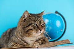 Η όμορφη γάτα βρίσκεται σε ένα ανοικτό βιβλίο γάτα με τα γυαλιά και ένα βιβλίο στοκ φωτογραφίες με δικαίωμα ελεύθερης χρήσης