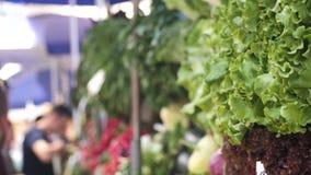 Η σαλάτα και άλλη πρασινάδα βρίσκονται στο μετρητή στην αγορά πόλεων στη θερινή ημέρα και unrecognizable απόθεμα βίντεο
