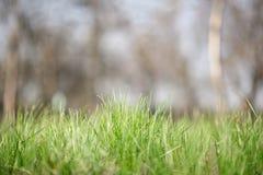 Η χλόη αναπτύσσει Πράσινη χλόη φρέσκια πράσινη υγιής άνοιξη χλόης στοκ εικόνες με δικαίωμα ελεύθερης χρήσης