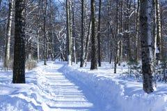 η πόλη κοντά στο δρόμο σιδηροδρόμων λάμπει ήλιος χιονιού στο χειμερινό δάσος Δρόμος με τις σημύδες ηλιόλουστος χειμώνας πρ στοκ φωτογραφία με δικαίωμα ελεύθερης χρήσης