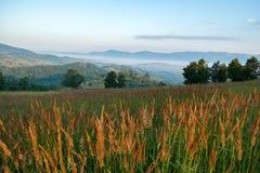Θερινό πρωί της Misty στην κοιλάδα Almaj στοκ εικόνα