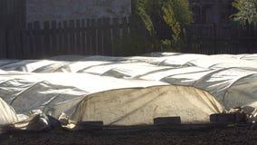 Θερμοκήπια στο αγρόκτημα φιλμ μικρού μήκους