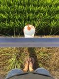 Θηλυκά πόδια που φορούν τις παντόφλες stainding μπροστά από ένα κιγκλίδωμα και έναν τομέα ρυζιού στοκ φωτογραφίες