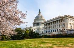 Ιαπωνικό δέντρο και οι Ηνωμένες Πολιτείες Capitol κερασιών στοκ εικόνες με δικαίωμα ελεύθερης χρήσης