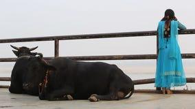 Ιερές αγελάδες σε ένα ghat φιλμ μικρού μήκους