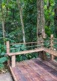 Κάθισμα μπαμπού κοντά στο υψηλό δέντρο στοκ φωτογραφίες με δικαίωμα ελεύθερης χρήσης