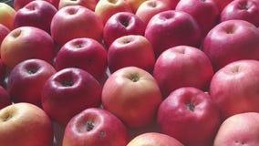 Κάμερα υποβάθρου μήλων που κινείται διαγώνια απόθεμα βίντεο
