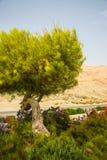 Κήποι και δέντρα λουλουδιών στοκ φωτογραφίες