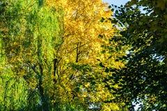 Κίτρινα και πράσινα δέντρα στοκ εικόνες