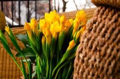 Κίτρινα λουλούδια για τις διακοπές της άνοιξη στοκ εικόνες