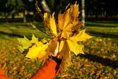 Κίτρινα φύλλα υπό εξέταση στοκ εικόνες