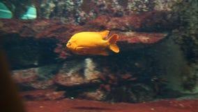 Κίτρινα saltwater ψάρια μπροστά από το σκόπελο στοκ φωτογραφία με δικαίωμα ελεύθερης χρήσης