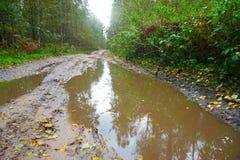 Κακός δασικός δρόμος μετά από τη βροχή φθινοπώρου και το χαμένο σκυλί στοκ εικόνα