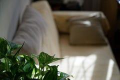Καναπές Comfy με flowerpots στο καθιστικό, έννοια προτύπων στοκ εικόνες
