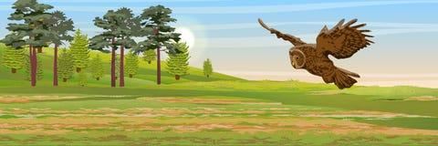 Καστανόξανθη κουκουβάγια που πετά πέρα από το λιβάδι Πεύκο, κομψές δέντρα και χλόη Άγρια ζώα και πουλιά της Ευρασίας και Σκανδινα διανυσματική απεικόνιση