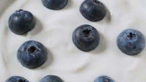 Κατανάλωση των βακκινίων με την κρέμα ή το γιαούρτι από το κουτάλι, υπόβαθρο φρούτων φιλμ μικρού μήκους
