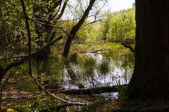 Καταδυμένος καρστ ποταμός, λίμνη Doberdà ² στοκ φωτογραφίες