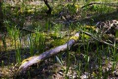 Καταδυμένος καρστ ποταμός, λίμνη Doberdà ² στοκ εικόνα με δικαίωμα ελεύθερης χρήσης