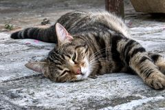 Καφετής ριγωτός ύπνος γατών στο πάτωμα στοκ εικόνες