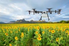 Κηφήνας γεωργίας που πετά στον τομέα ηλίανθων, έξυπνη αγροτική έννοια στοκ εικόνα με δικαίωμα ελεύθερης χρήσης