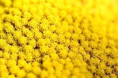 Κινηματογράφηση σε πρώτο πλάνο ενός κίτρινου λουλουδιού στοκ εικόνες με δικαίωμα ελεύθερης χρήσης