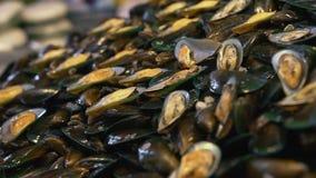 Κινηματογράφηση σε πρώτο πλάνο μυδιών θαλασσινών κοχυλιών Φρέσκα προϊόντα θαλασσινών Delishious απόθεμα βίντεο