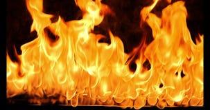 Κινηματογράφηση σε πρώτο πλάνο του καψίματος της πυρκαγιάς, φλόγες που καίει στο μαύρο υπόβαθρο, σε αργή κίνηση φιλμ μικρού μήκους