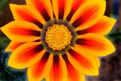 Κινηματογράφηση σε πρώτο πλάνο του πορτοκαλιού λουλουδιού στοκ εικόνα με δικαίωμα ελεύθερης χρήσης
