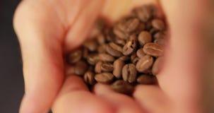 Κινηματογράφηση σε πρώτο πλάνο των φασολιών καφέ αρσενικοί φοίνικες απόθεμα βίντεο