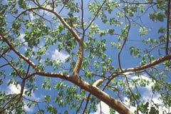 Κλάδος δέντρων και πράσινα φύλλα στοκ φωτογραφία με δικαίωμα ελεύθερης χρήσης