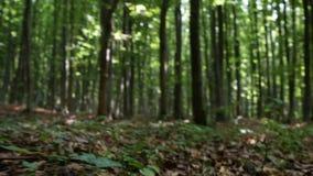 Κλείστε επάνω τα βήματα ατόμων περπατώντας στο ξύλο σε μια πορεία βουνών μέσω της φύσης φιλμ μικρού μήκους