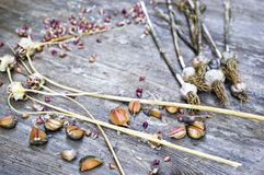 Κλείστε επάνω, τοπ πυροβολισμός των ξηρών βολβών σκόρδου δερμάτων, γαρίφαλα, άσπρα, πορτοκαλιά, πορφυρά χρώματα, αγροτικό ξύλινο  στοκ εικόνες